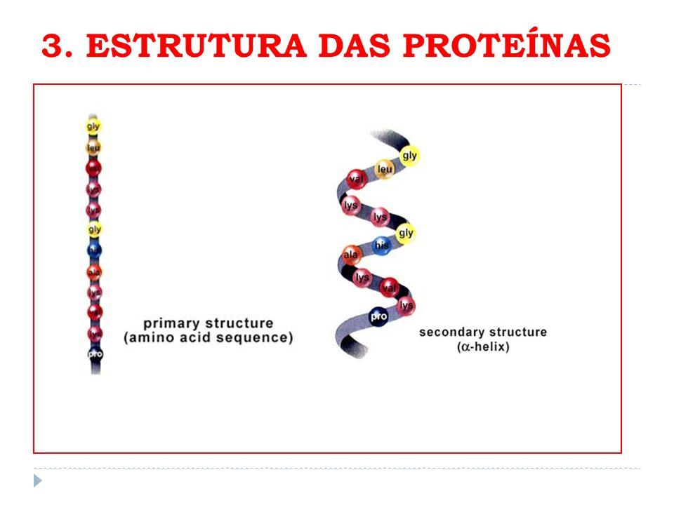 3. ESTRUTURA DAS PROTEÍNAS