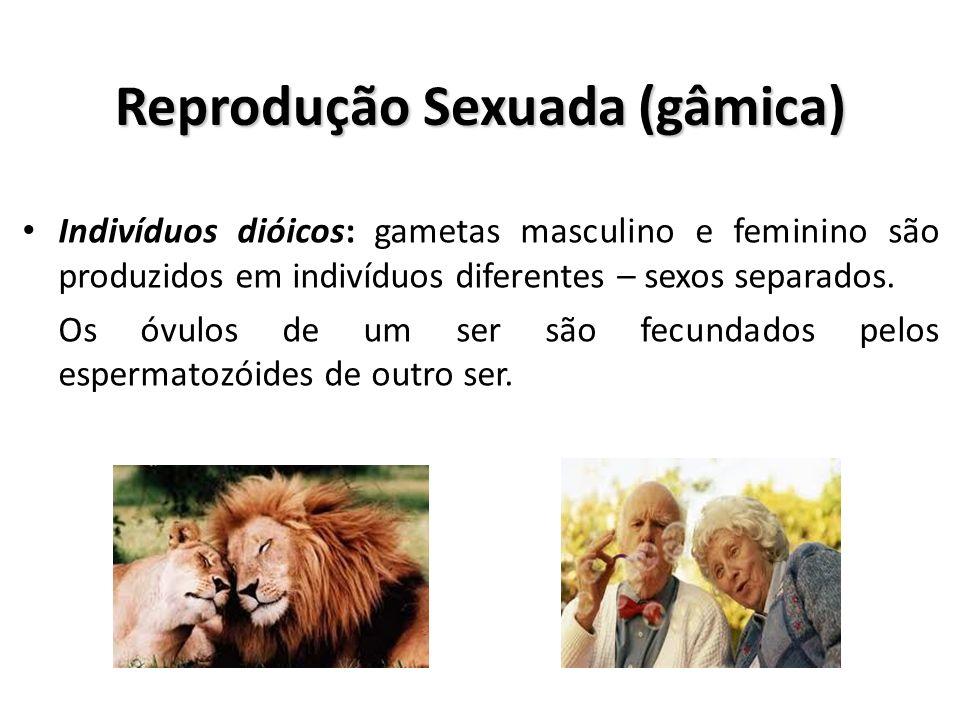 Reprodução Sexuada (gâmica)