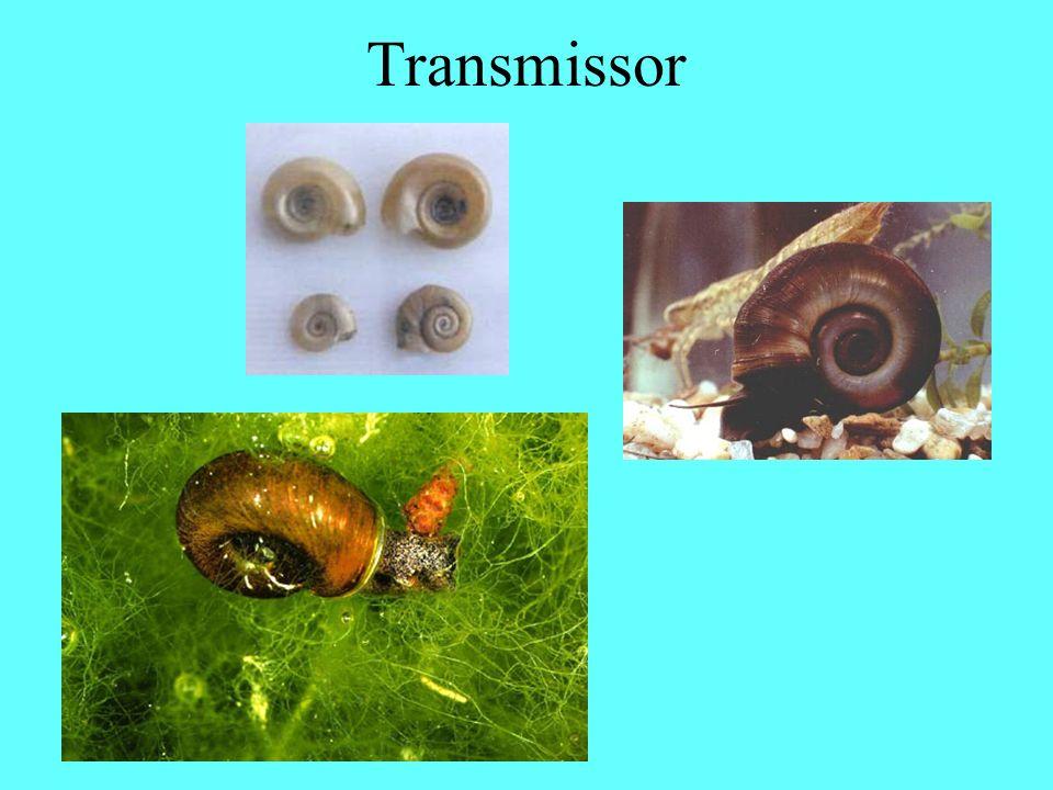 Transmissor