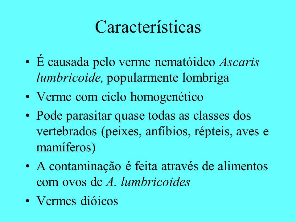 Características É causada pelo verme nematóideo Ascaris lumbricoide, popularmente lombriga. Verme com ciclo homogenético.