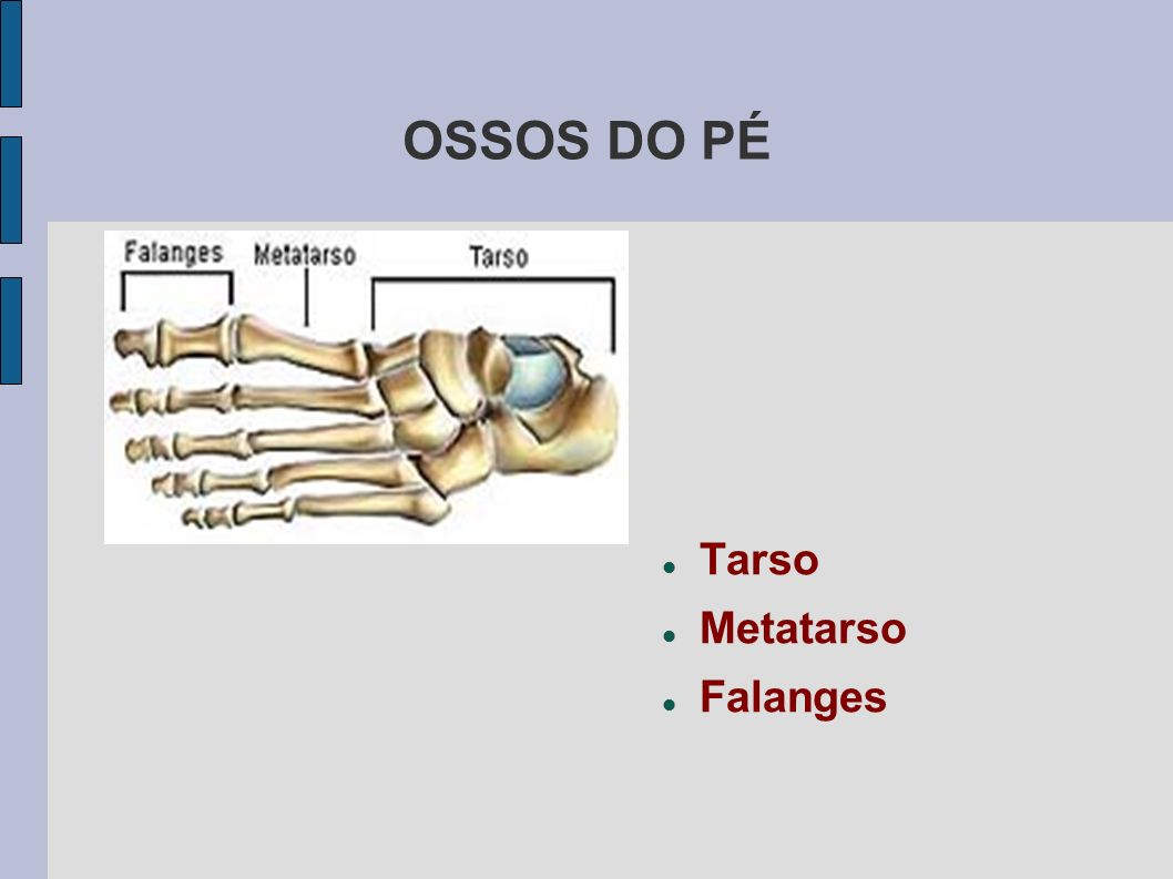 OSSOS DO PÉ Tarso Metatarso Falanges