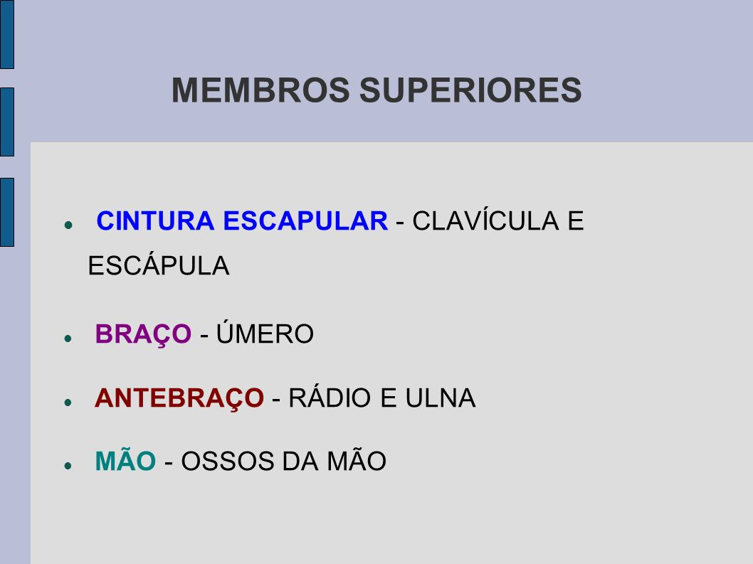 MEMBROS SUPERIORES CINTURA ESCAPULAR - CLAVÍCULA E ESCÁPULA