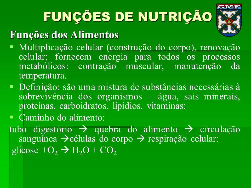 FUNÇÕES DE NUTRIÇÃO Funções dos Alimentos