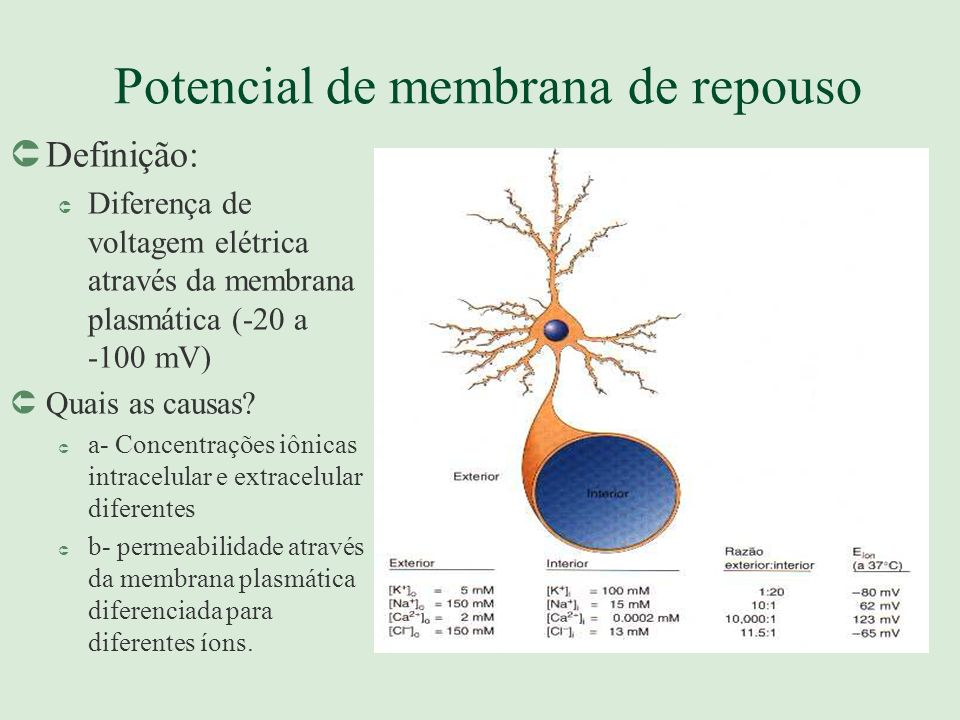 Potencial de membrana de repouso