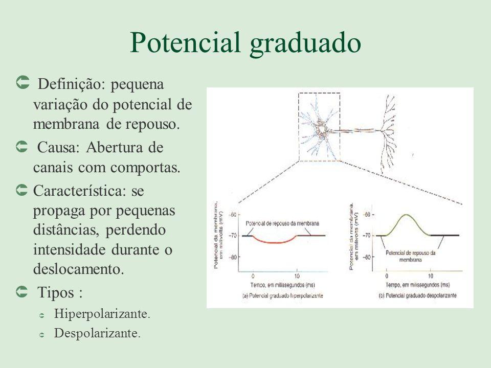 Potencial graduado Definição: pequena variação do potencial de membrana de repouso. Causa: Abertura de canais com comportas.