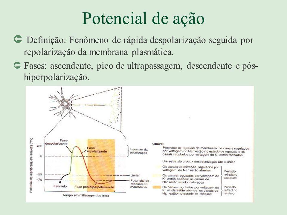 Potencial de ação Definição: Fenômeno de rápida despolarização seguida por repolarização da membrana plasmática.
