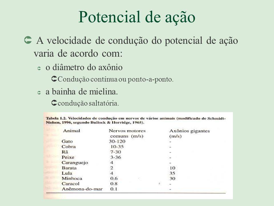Potencial de açãoA velocidade de condução do potencial de ação varia de acordo com: o diâmetro do axônio.