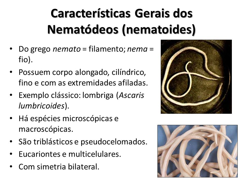 Características Gerais dos Nematódeos (nematoides)