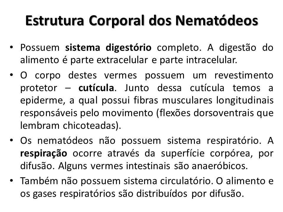Estrutura Corporal dos Nematódeos