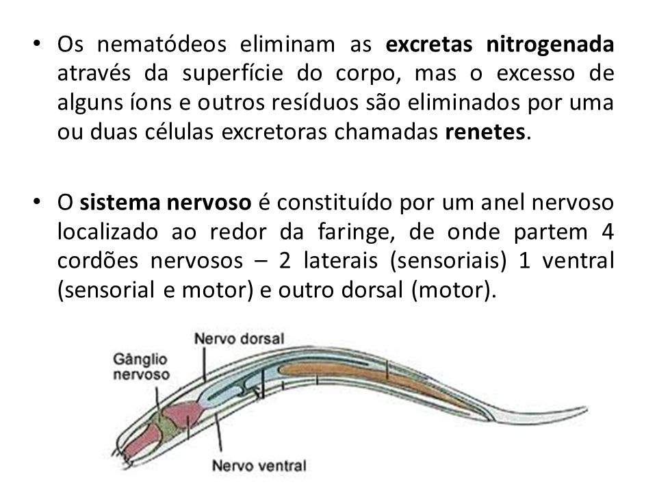 Os nematódeos eliminam as excretas nitrogenada através da superfície do corpo, mas o excesso de alguns íons e outros resíduos são eliminados por uma ou duas células excretoras chamadas renetes.