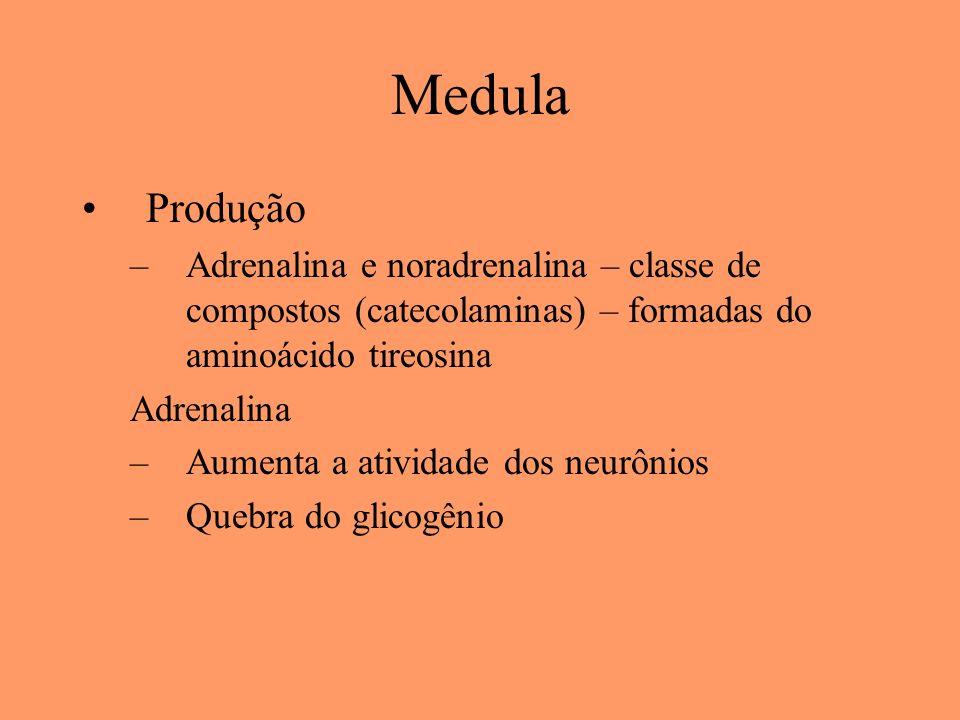 Medula Produção. Adrenalina e noradrenalina – classe de compostos (catecolaminas) – formadas do aminoácido tireosina.