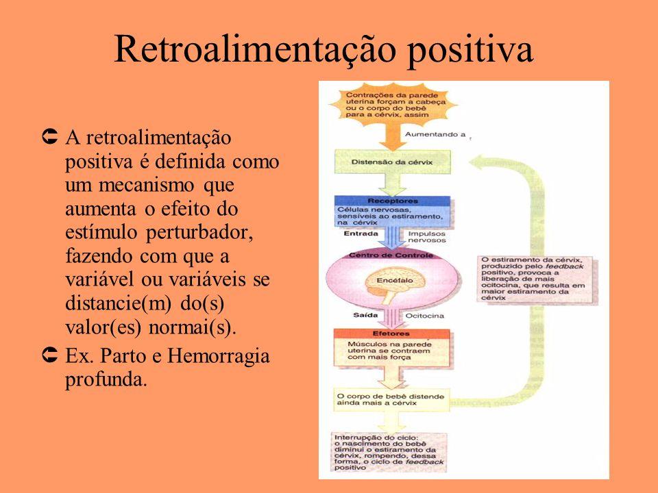 Retroalimentação positiva