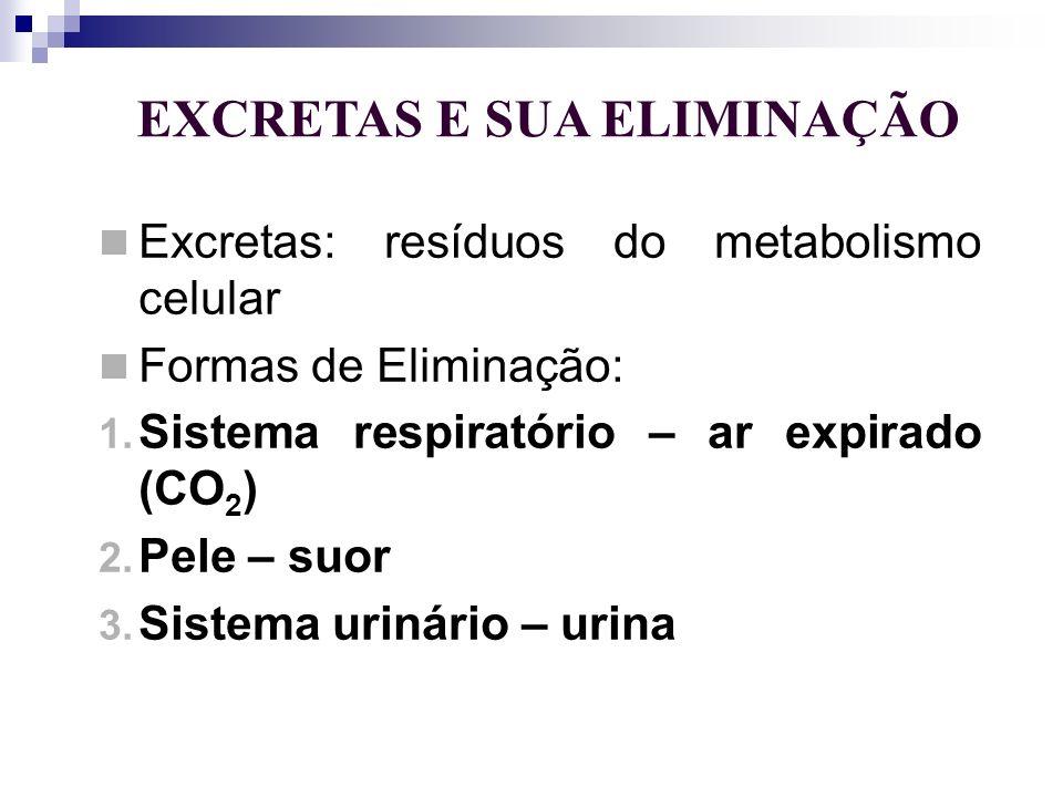EXCRETAS E SUA ELIMINAÇÃO