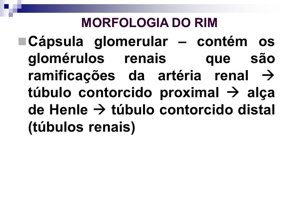 MORFOLOGIA DO RIM