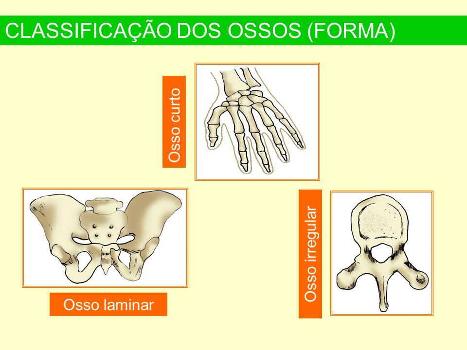 CLASSIFICAÇÃO DOS OSSOS (FORMA)