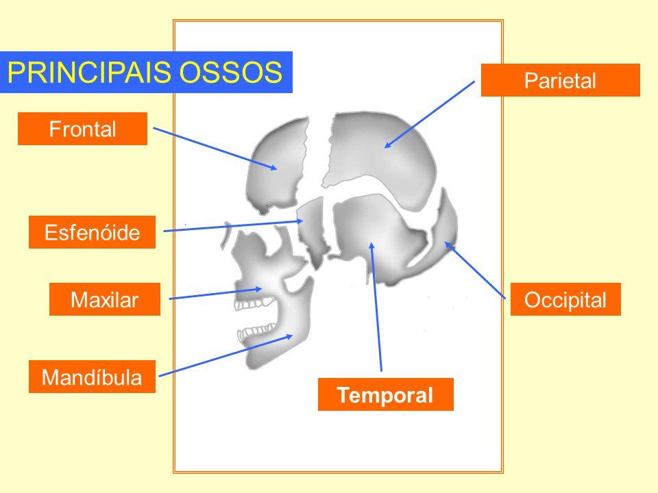 PRINCIPAIS OSSOS Parietal Frontal Esfenóide Maxilar Occipital