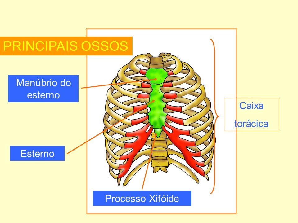 PRINCIPAIS OSSOS Manúbrio do esterno Caixa torácica Esterno