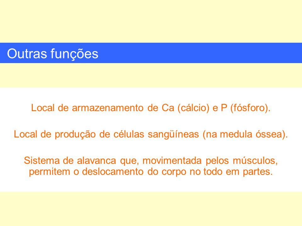Outras funções Local de armazenamento de Ca (cálcio) e P (fósforo).
