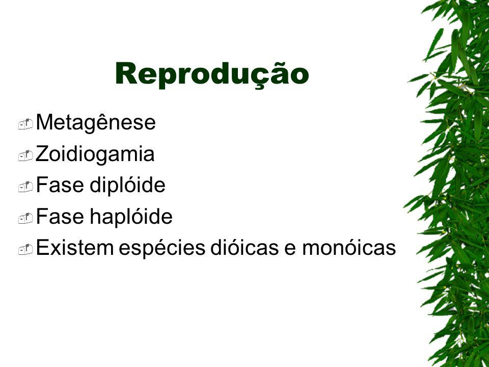 Reprodução Metagênese Zoidiogamia Fase diplóide Fase haplóide