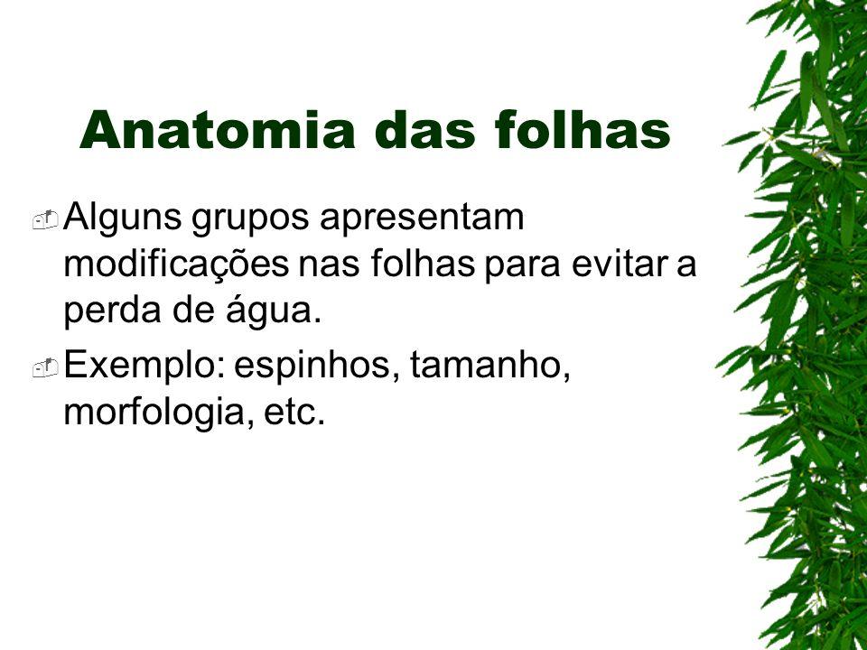 Anatomia das folhas Alguns grupos apresentam modificações nas folhas para evitar a perda de água.
