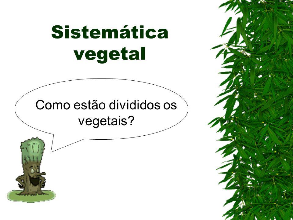 Como estão divididos os vegetais