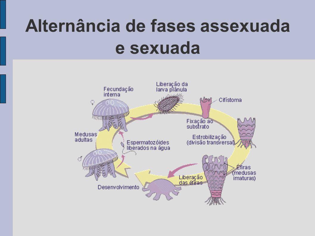Alternância de fases assexuada e sexuada