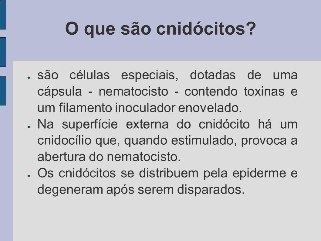 O que são cnidócitos são células especiais, dotadas de uma cápsula - nematocisto - contendo toxinas e um filamento inoculador enovelado.