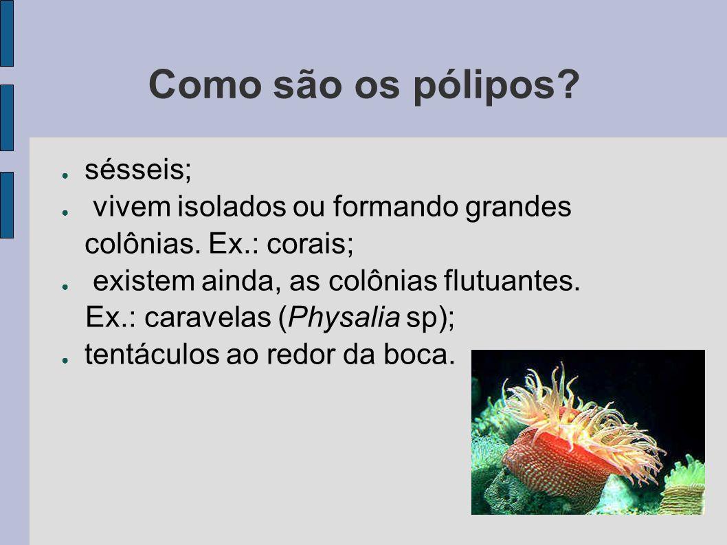 Como são os pólipos sésseis;