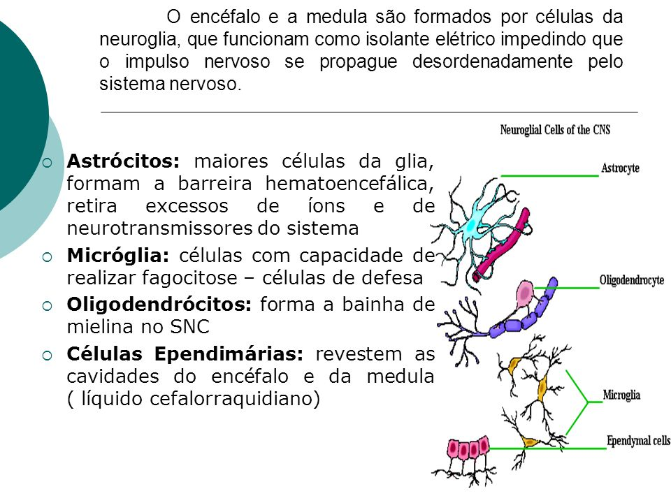 O encéfalo e a medula são formados por células da neuroglia, que funcionam como isolante elétrico impedindo que o impulso nervoso se propague desordenadamente pelo sistema nervoso.