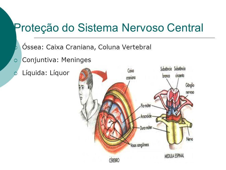 Proteção do Sistema Nervoso Central