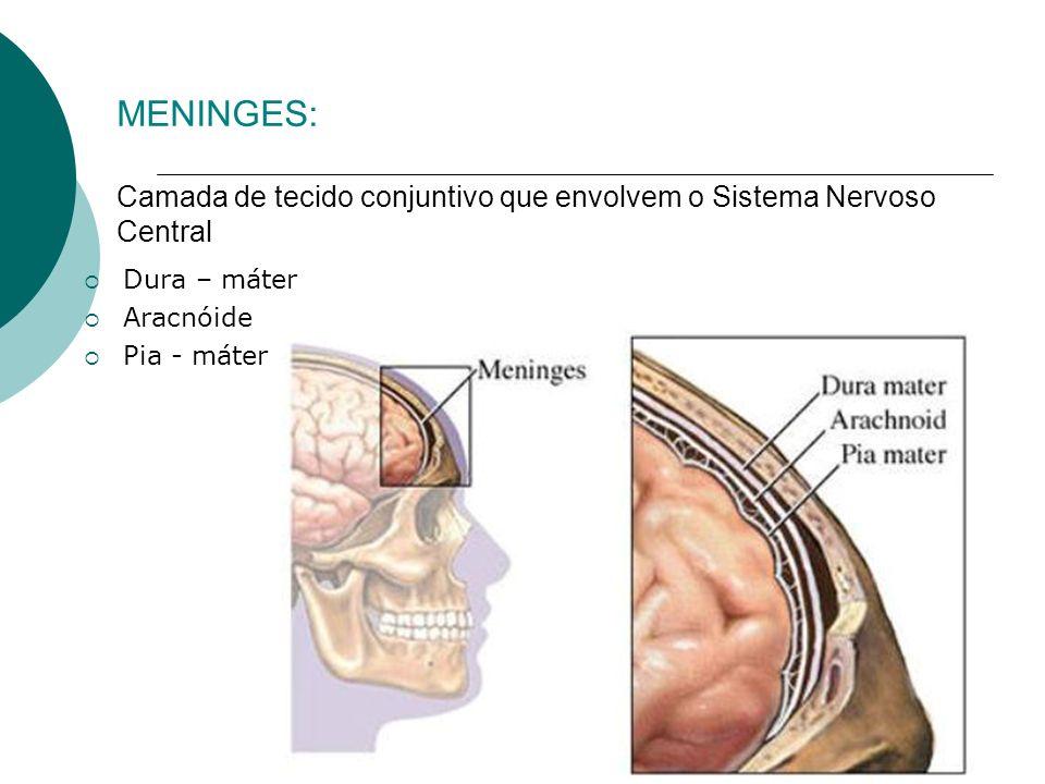 MENINGES: Camada de tecido conjuntivo que envolvem o Sistema Nervoso Central