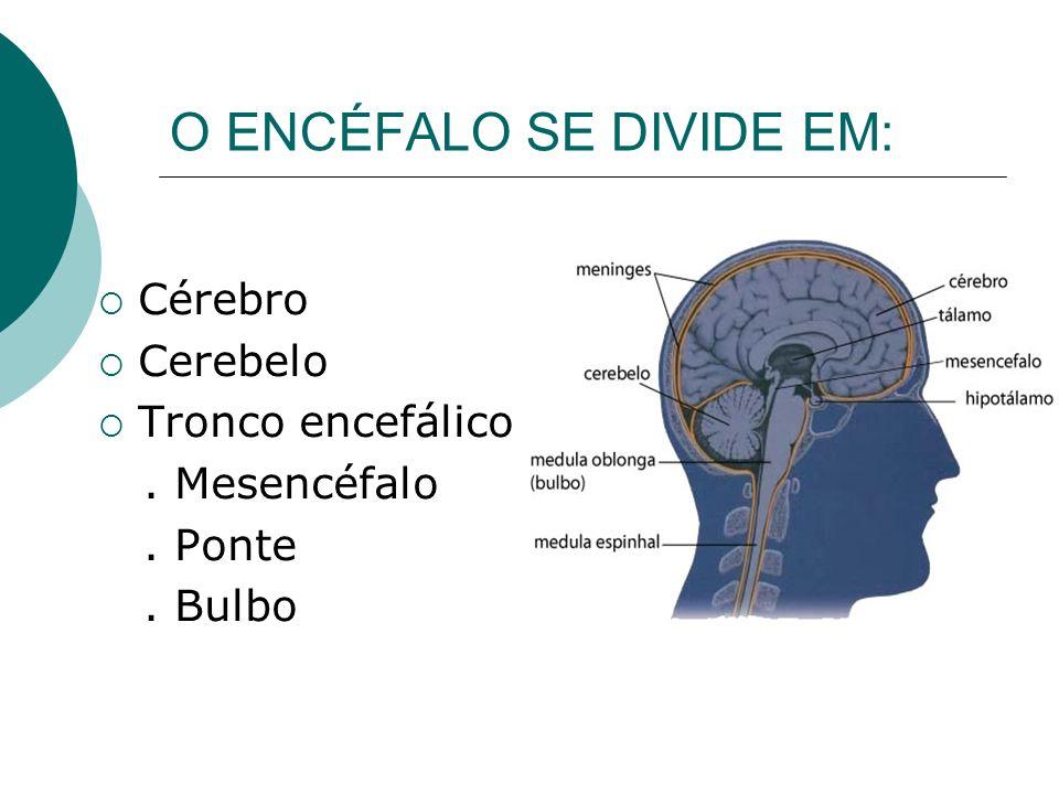 O ENCÉFALO SE DIVIDE EM: