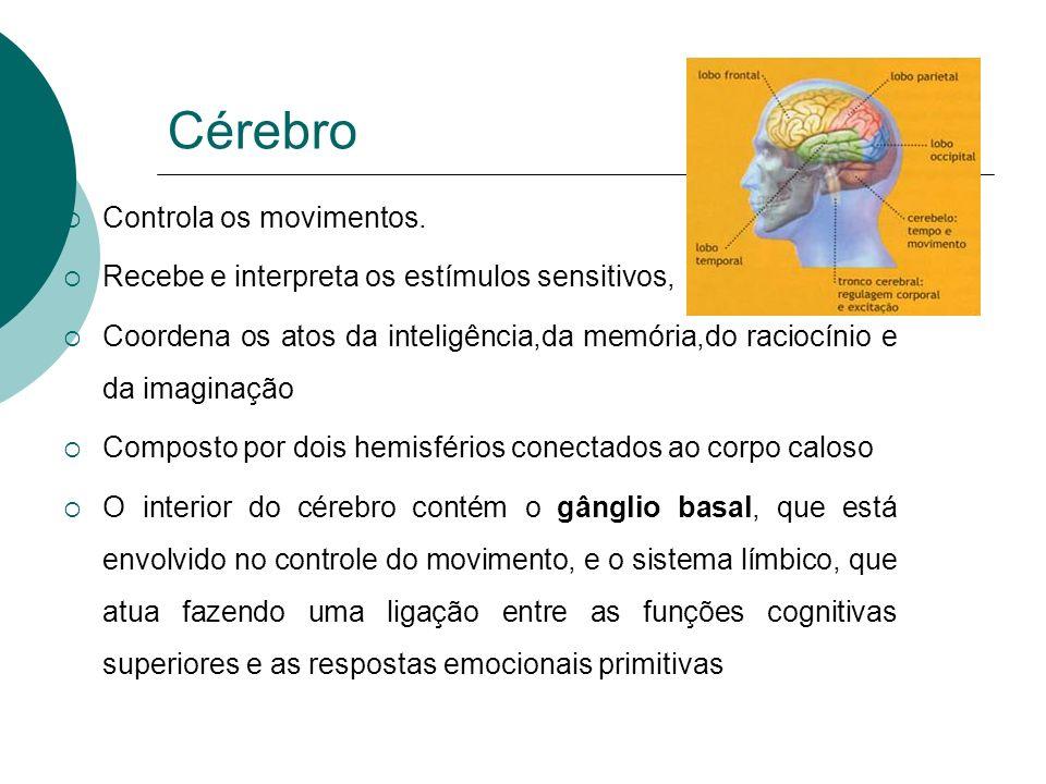 Cérebro Controla os movimentos.