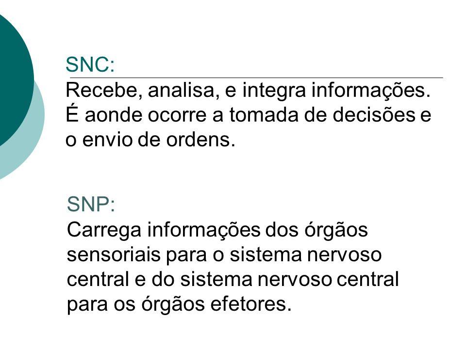 SNC: Recebe, analisa, e integra informações