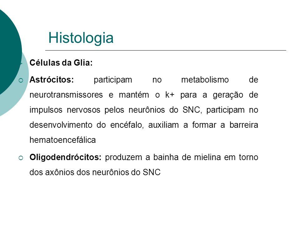 Histologia Células da Glia: