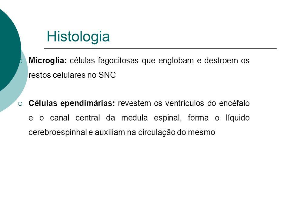 Histologia Microglia: células fagocitosas que englobam e destroem os restos celulares no SNC.