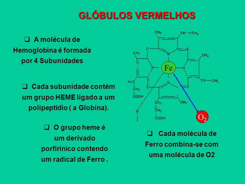 GLÓBULOS VERMELHOS Fe O2