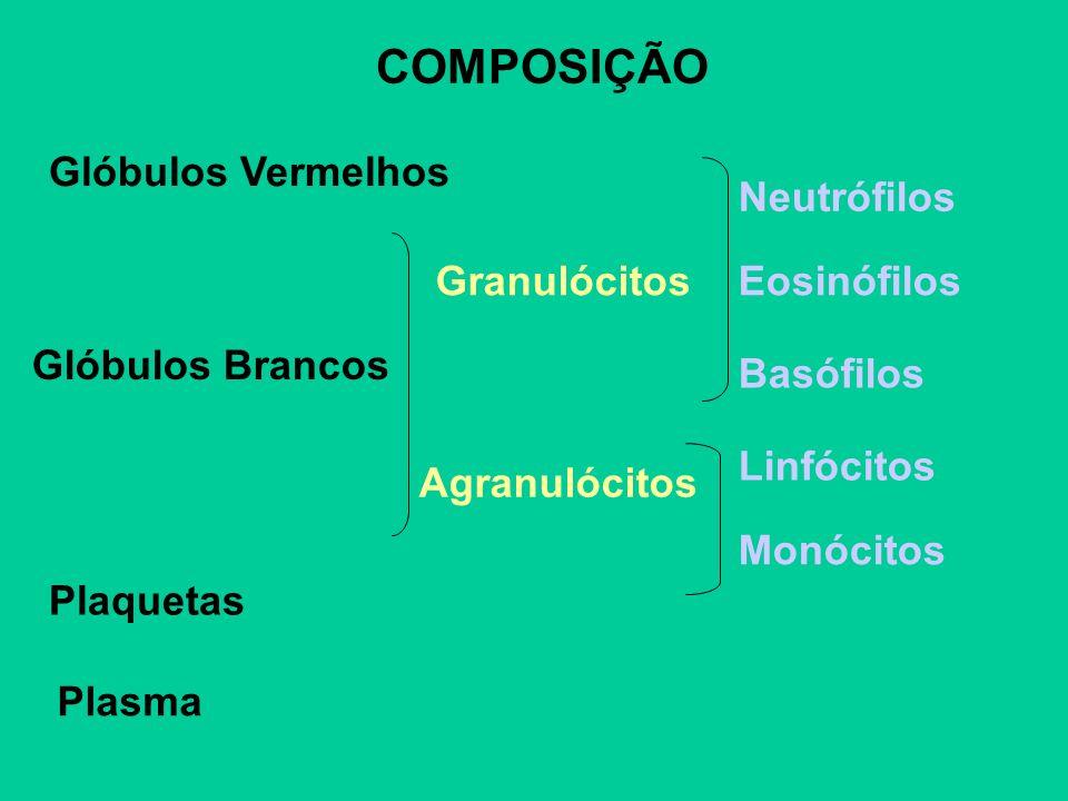 COMPOSIÇÃO Glóbulos Vermelhos Neutrófilos Granulócitos Eosinófilos