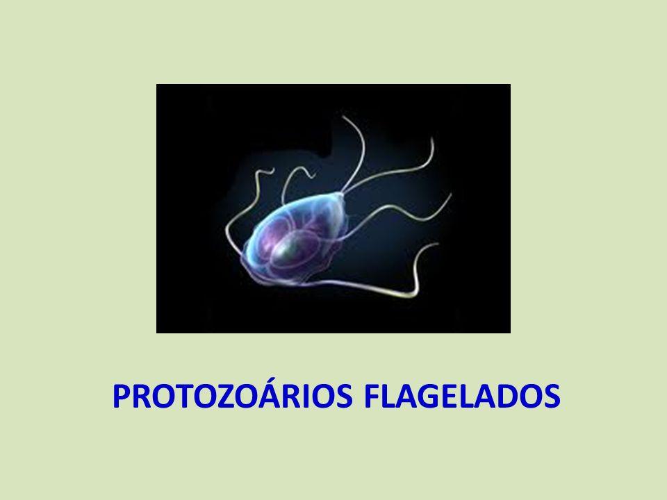 Protozoários flagelados