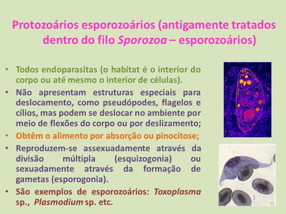 Protozoários esporozoários (antigamente tratados dentro do filo Sporozoa – esporozoários)
