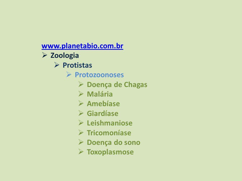 www.planetabio.com.br Zoologia. Protistas. Protozoonoses. Doença de Chagas. Malária. Amebíase.