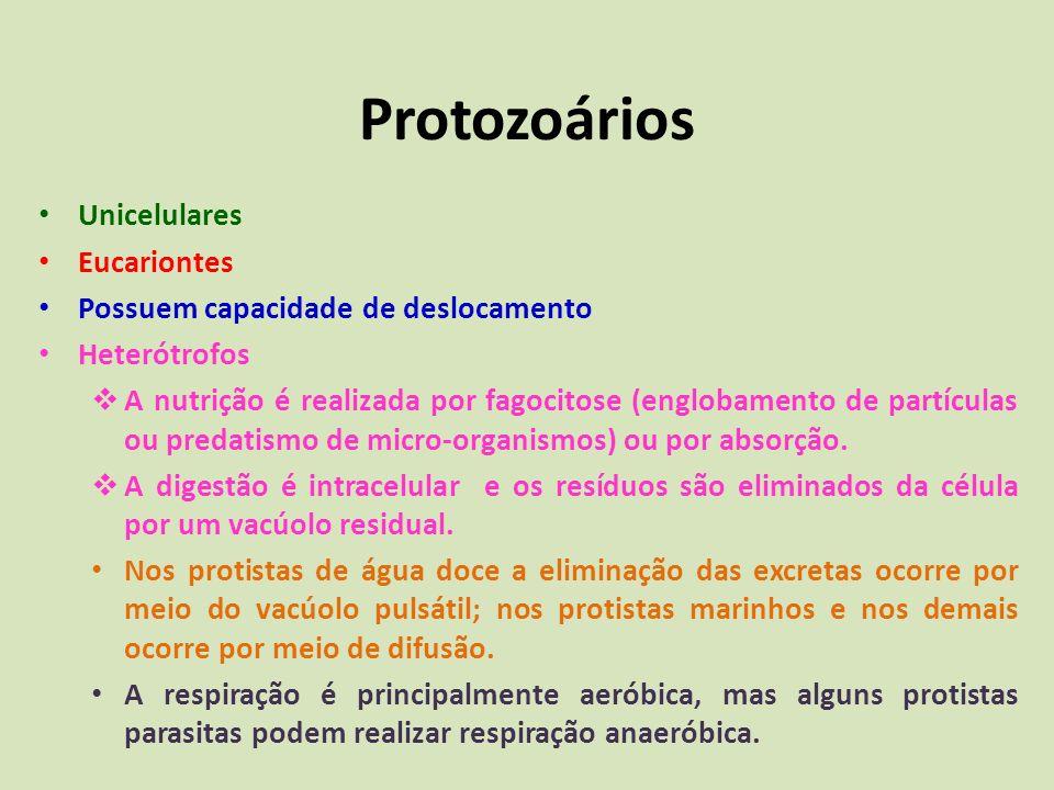 Protozoários Unicelulares Eucariontes