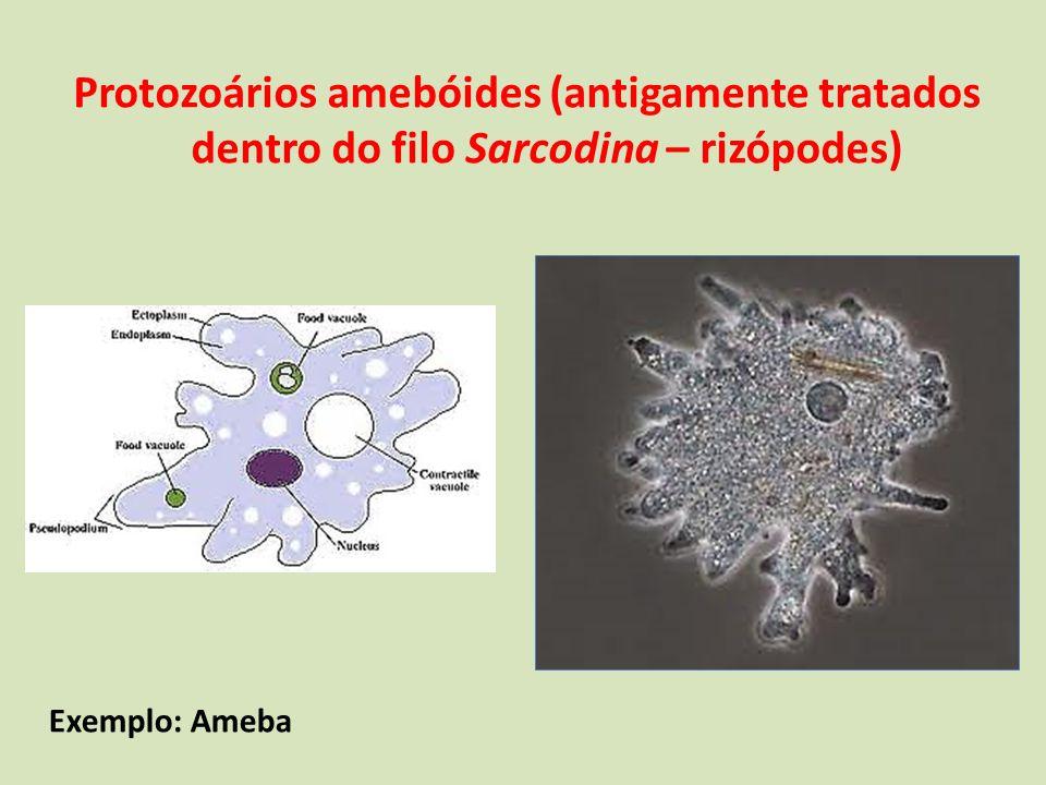 Protozoários amebóides (antigamente tratados dentro do filo Sarcodina – rizópodes)