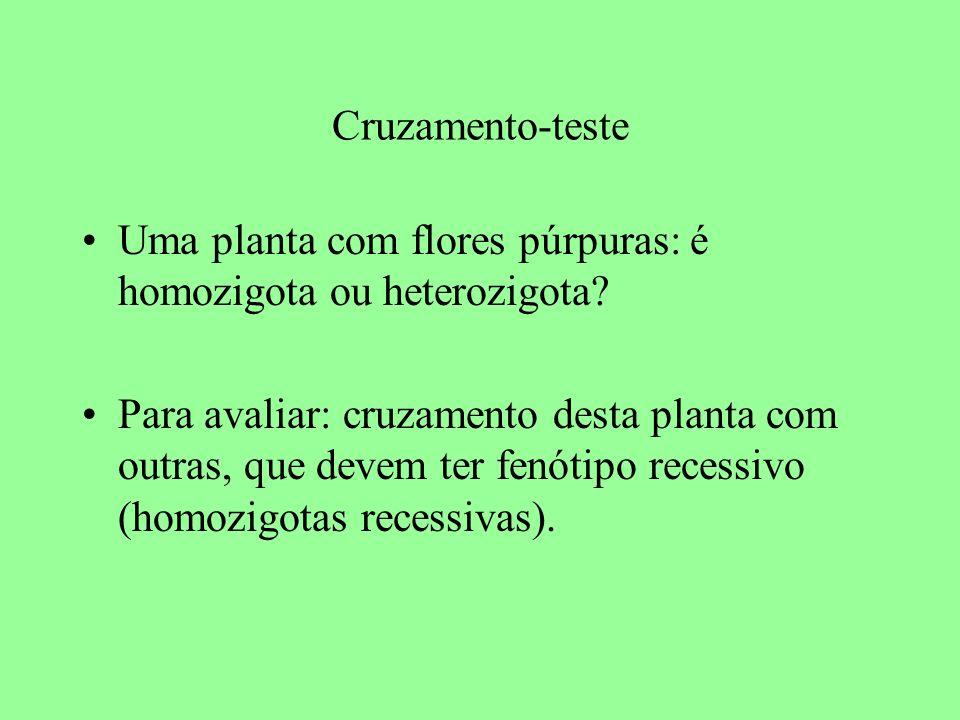 Cruzamento-teste Uma planta com flores púrpuras: é homozigota ou heterozigota