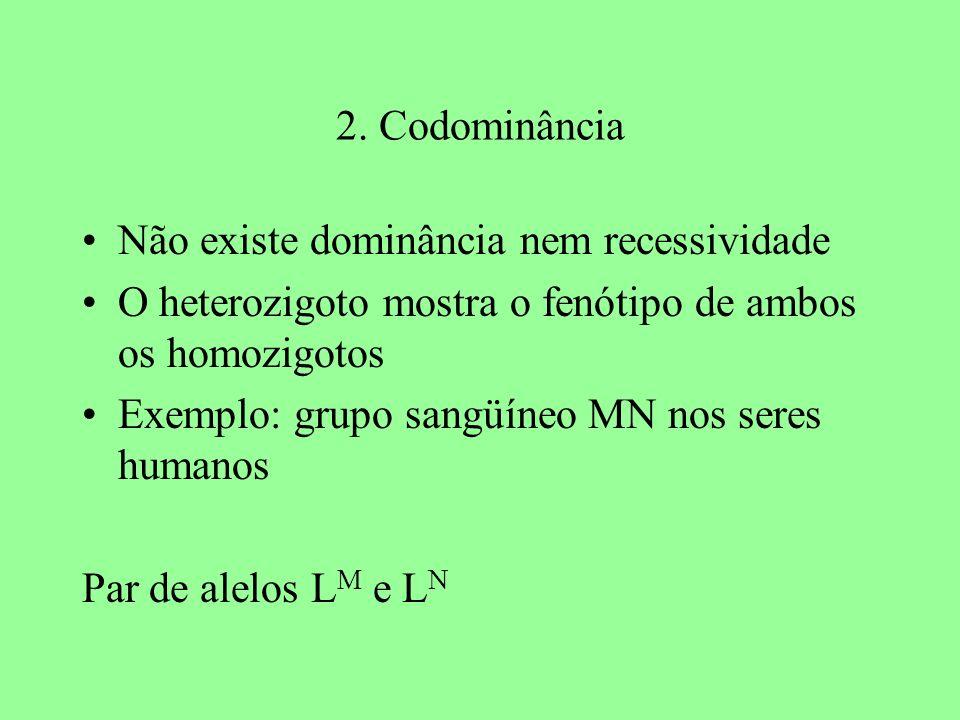 2. Codominância Não existe dominância nem recessividade. O heterozigoto mostra o fenótipo de ambos os homozigotos.