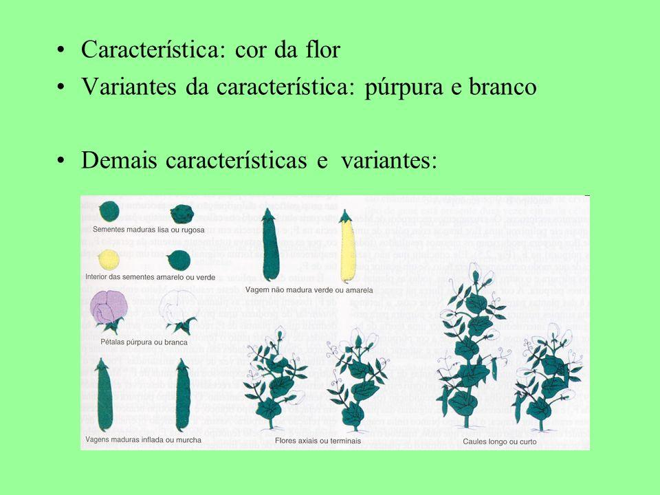 Característica: cor da flor