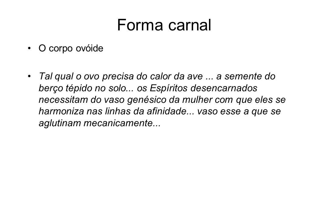 Forma carnal O corpo ovóide