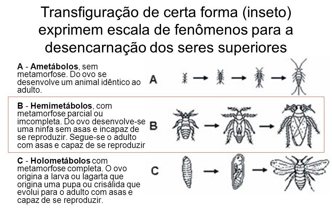 Transfiguração de certa forma (inseto) exprimem escala de fenômenos para a desencarnação dos seres superiores