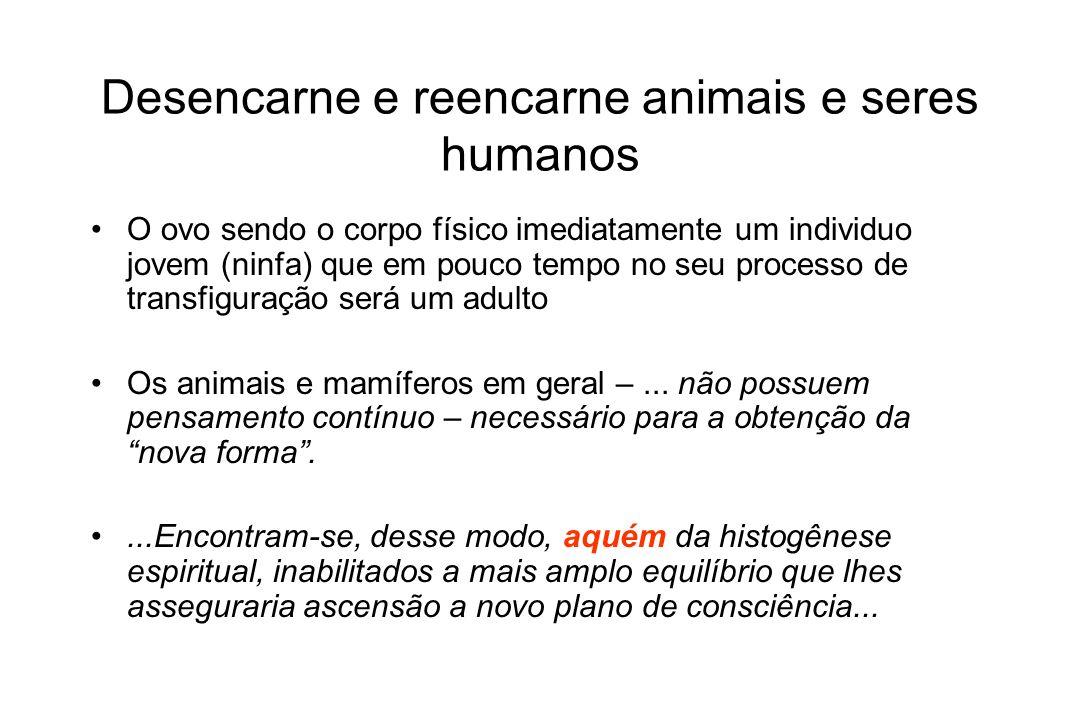 Desencarne e reencarne animais e seres humanos