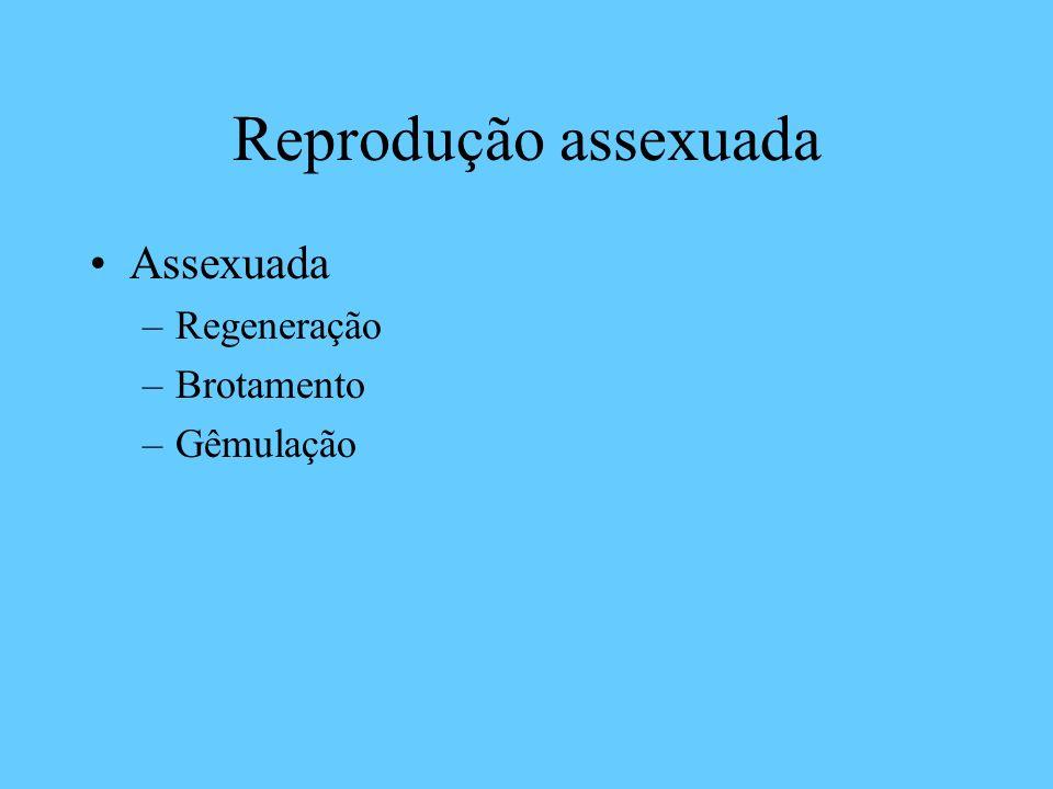 Reprodução assexuada Assexuada Regeneração Brotamento Gêmulação